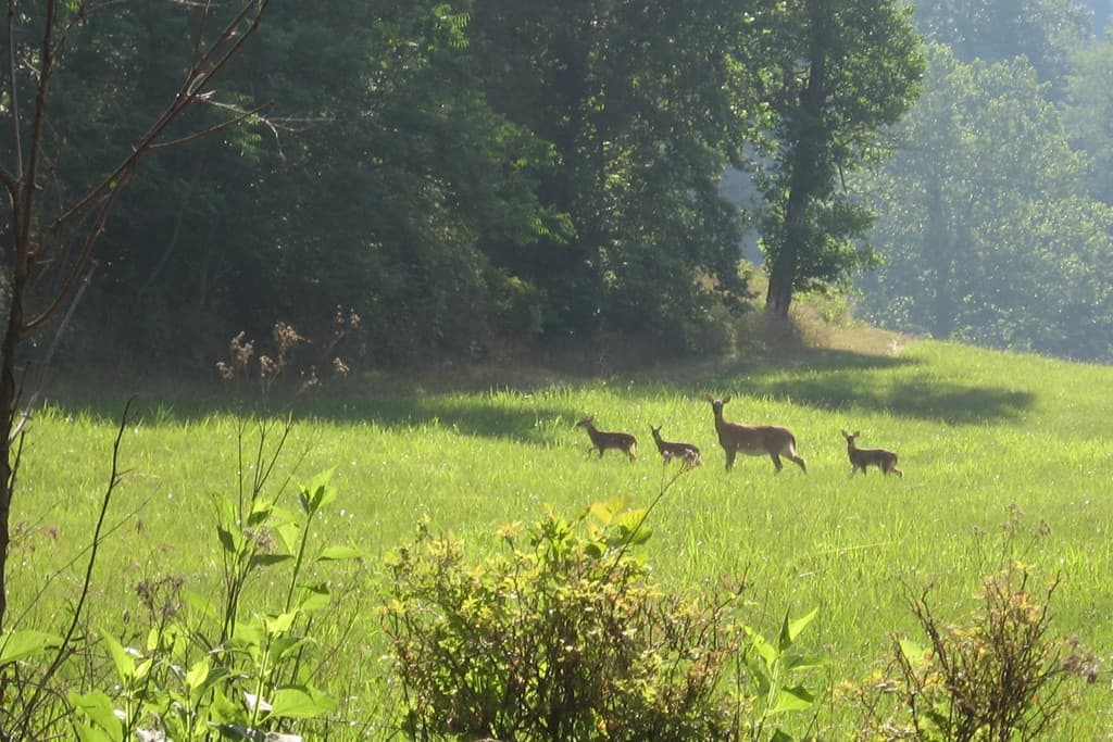 Deer in Virginia
