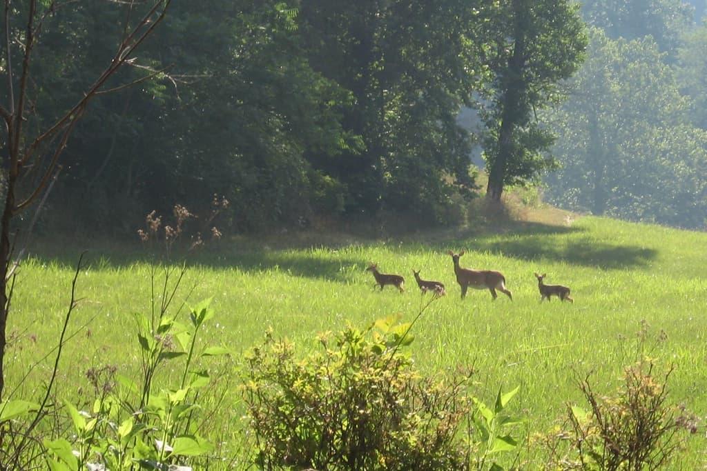 Deer in Virginia