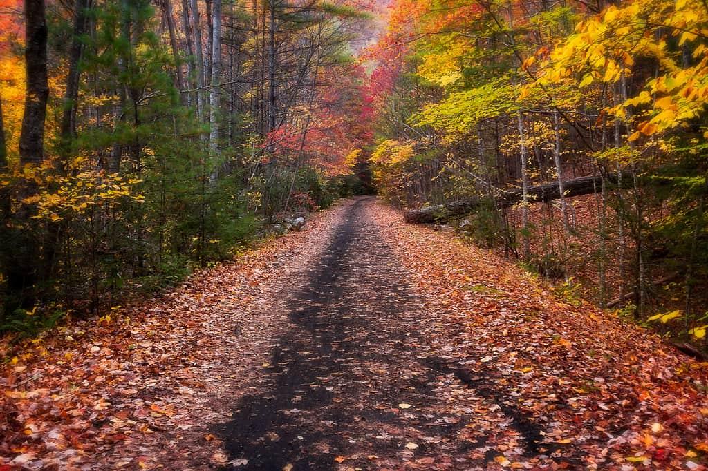 Fall on the Virginia Creeper Trail