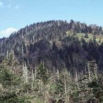 Appalachian Trail 2019 :: State-by-State Guide