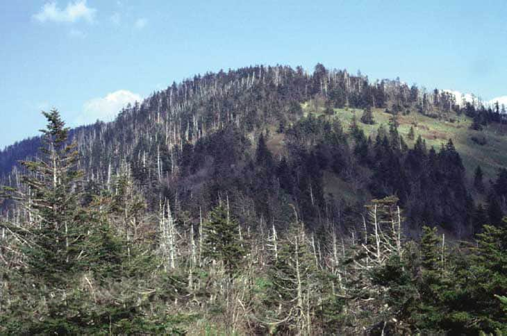 Clingmans Dome, the highest point of the Appalachian Trail