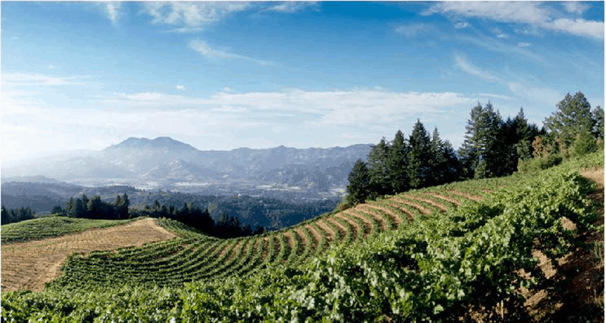 Sterling Winery: A Unique Wine Tasting Experience