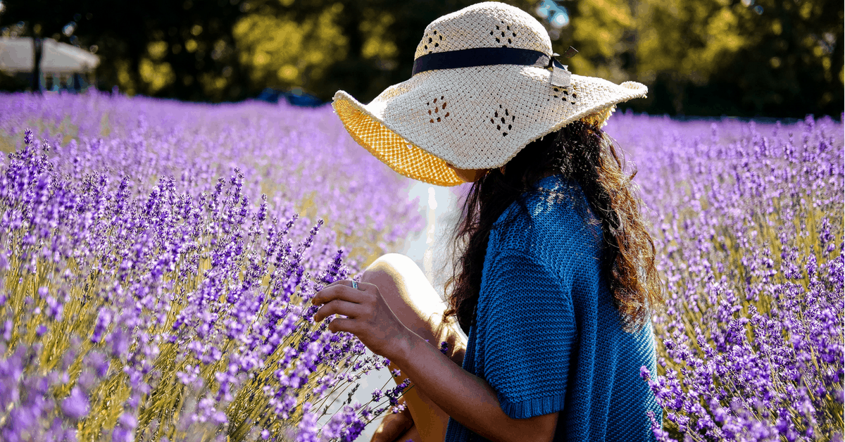 12 Most Instagram-Worthy Lavender Farms Across America