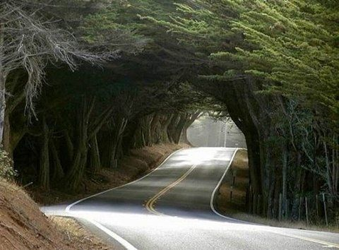 Tunnel of Trees Michigan - Best U.S Driving roads, Road trip Ideas.