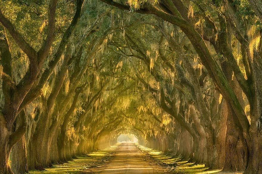 Oak Alley, New Orleans, Louisiana. Best U.S Road Trips and Motorcycle Roads.