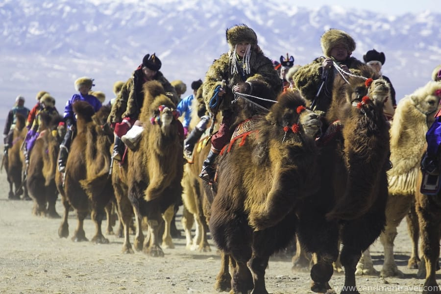 Thousand Camel Festival Mongolia