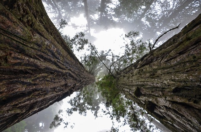 Gigantic Redwoods at Prairie Creek Redwoods State Park. [Best state parks California]