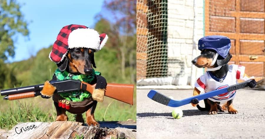 Dog-Costumes-Woofstock-Dog-festival