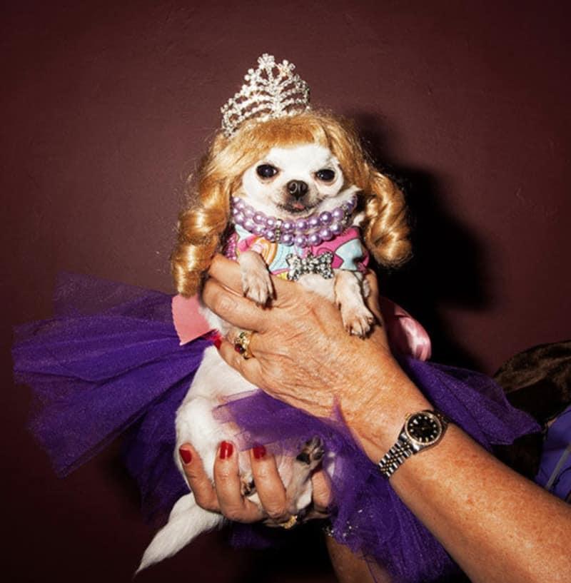 Dog-Festival-Beauty-Contest-Pageant-Show
