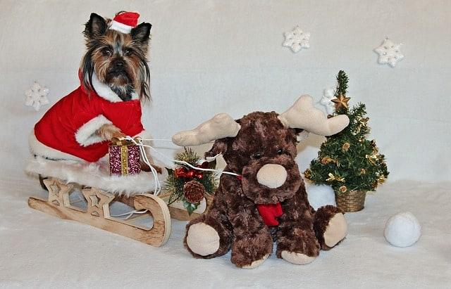Dog-Sledding-Christmas-Joke