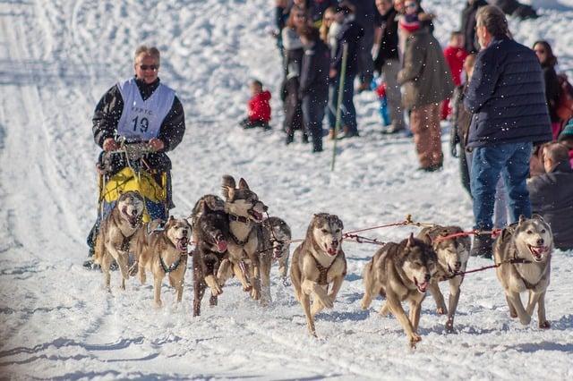 Dog-Sledding-Iditarod-sled-race