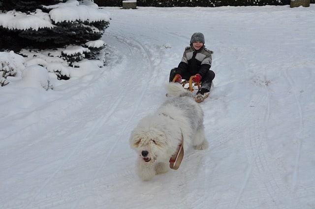 Dog-Sledding-New-York