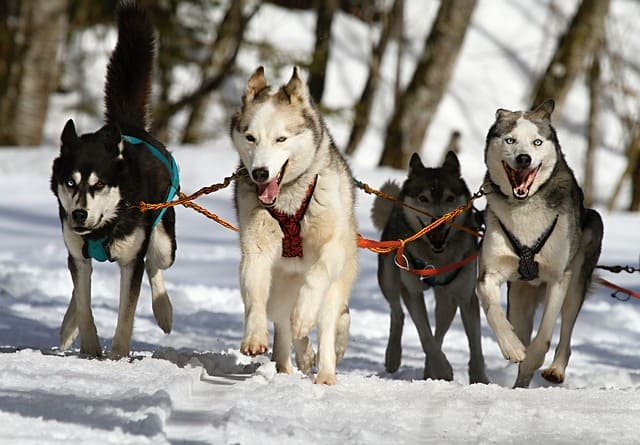Dog-Sledding-TOurs-Wild-WIlderness