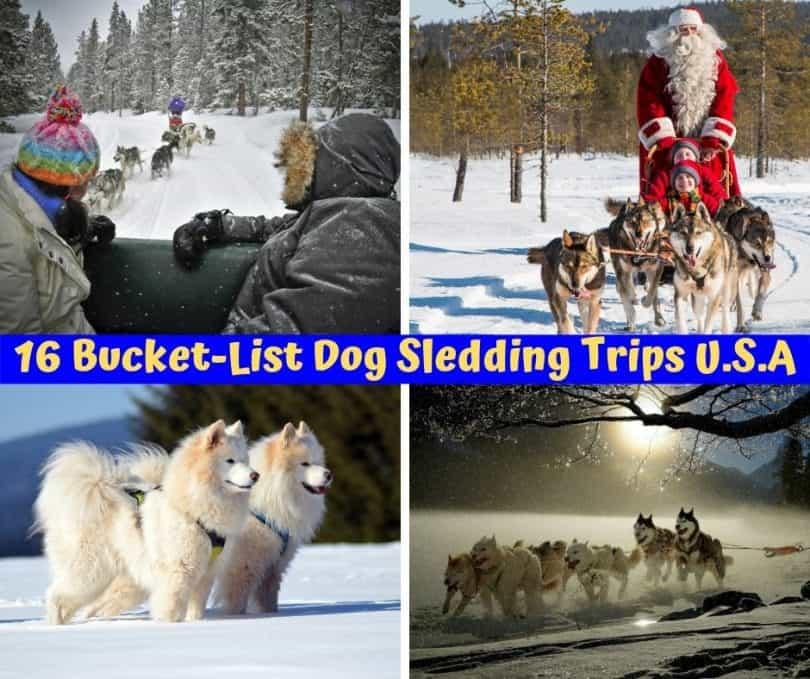 Dog-Sledding-Tour