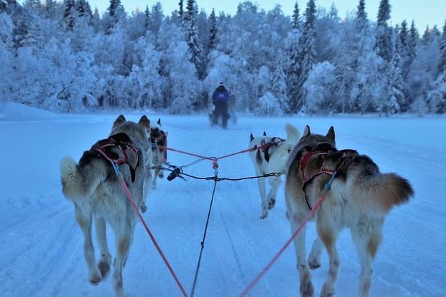 Dog-Sledding-Tour-Alaska