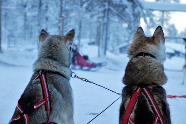 Dog-Sledding-Washington