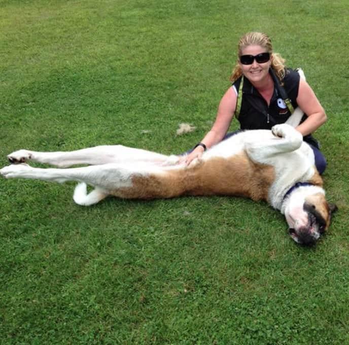 Dog-Training-Woofstock