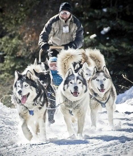Good-times-Tour-Dog-sledding-Alaska