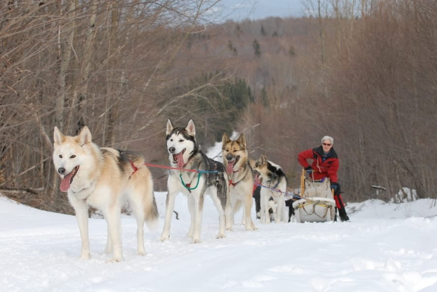 Maine Dog Sledding at Mahoosuc-Guide-service