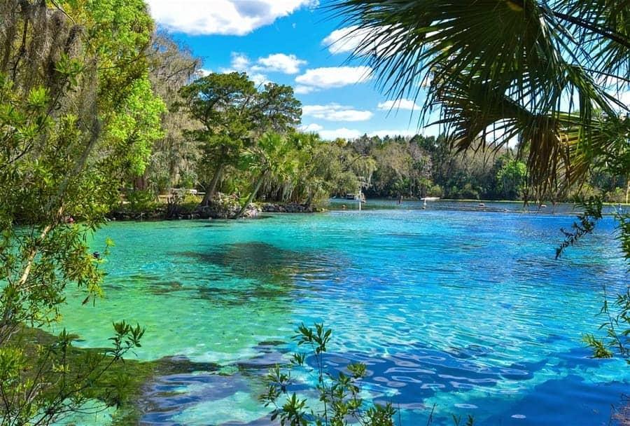 Ocala-National-Forest-Florida