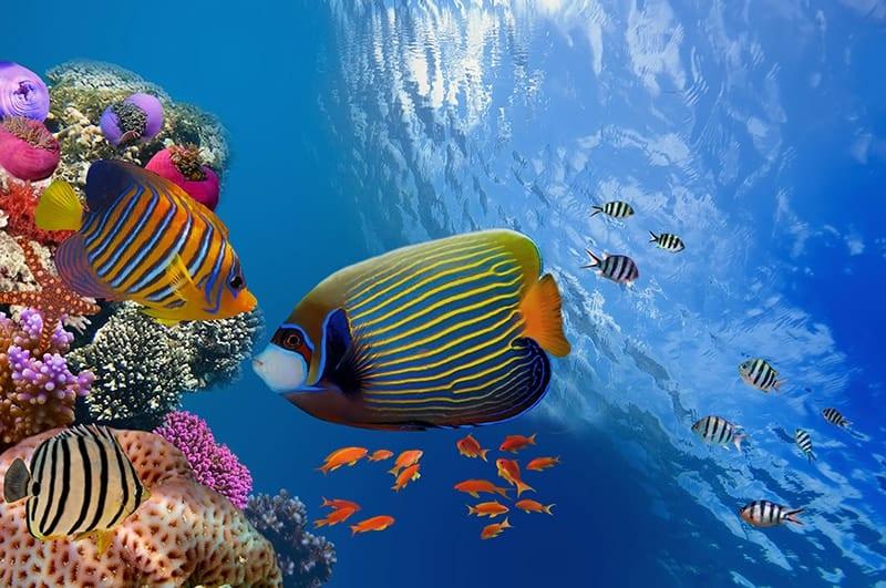 Floridas Keys Coral Reef