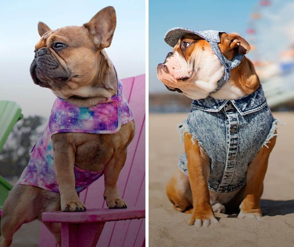 Woofstock-Fashion-Show-Dog-Outfit