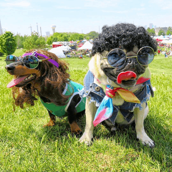 Peace and Love at Woof stock Dog Festival!
