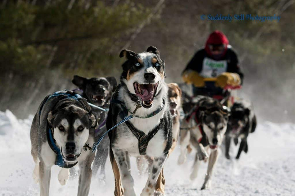 eden-dog-sledding-tour-vermont