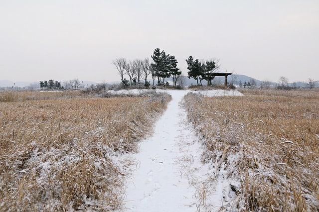 winter-maine-Dog-sledding