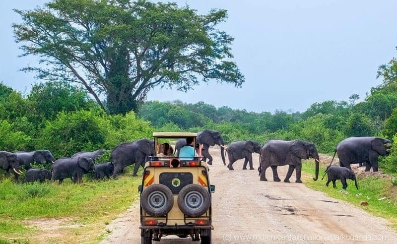Yala-National-Park-Couples-Honeymoon-Safari-Sri-Lanka