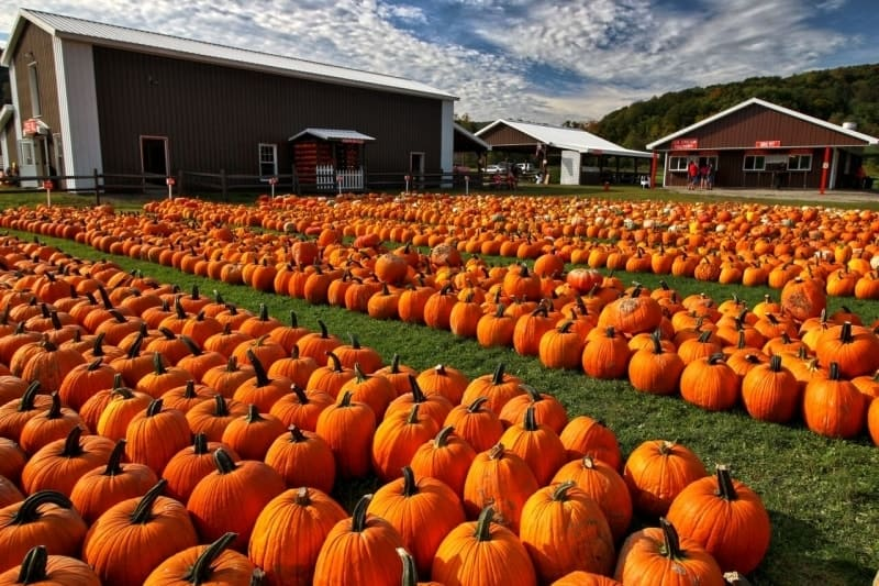Antumn is Pumpkin Season in St Augustine