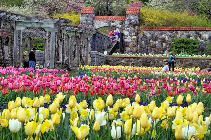 Biltmore Blooms Festival_Spring_Gardens
