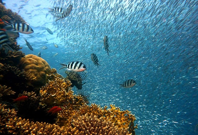 Coral Reef Pigeon Island Marine National Park Sri Lanka