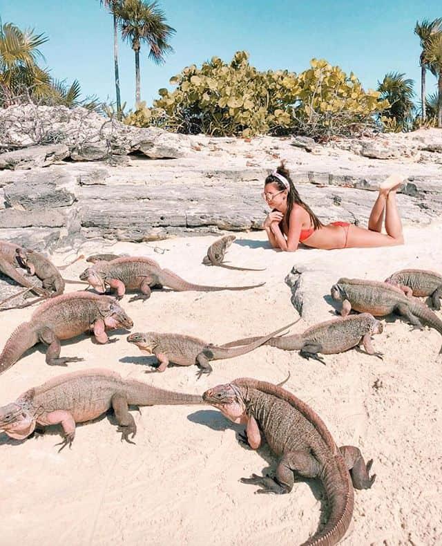 Iguana Island- Allens cay