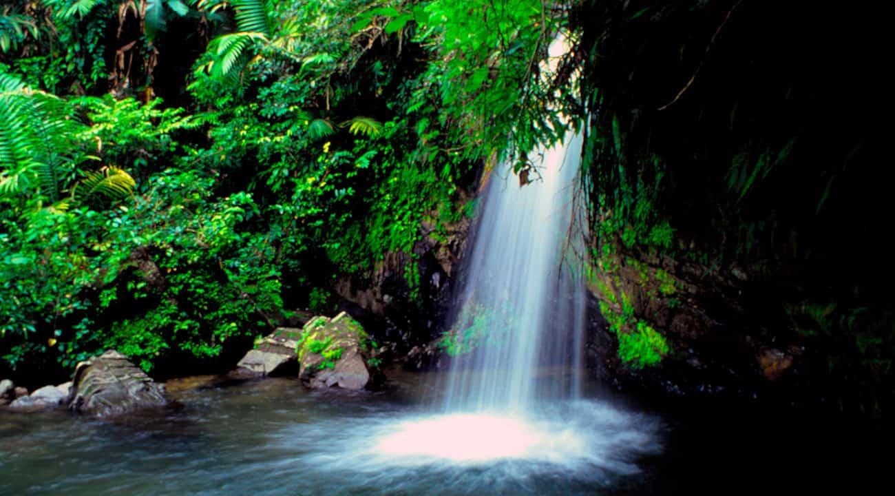 La Mina Falls- El Yunque Puerto Rico