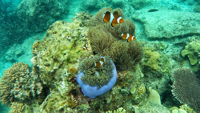 Ukulhas-Diving-Snorkeling Spots-Maldives-clown fish-Budget