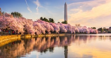 National cherry-blossom festival -tidal-basin-1