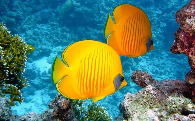 Pigeon Island Sri Lanka Tropical Fishes Diving trip