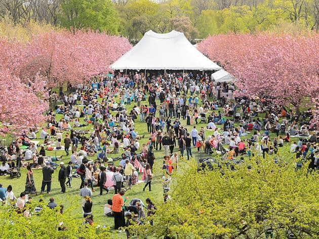 Sakura Matsuri:Cherry Blossom Festival - N.Y