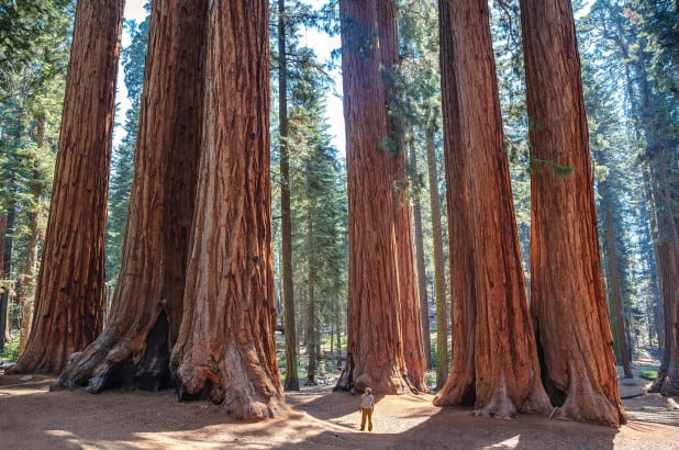 Sequoia National Park - California redwoods