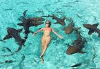 compass Cay Bahamas Swimming with sharks