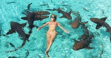 compass Cay Bahamas Swimming with sharks