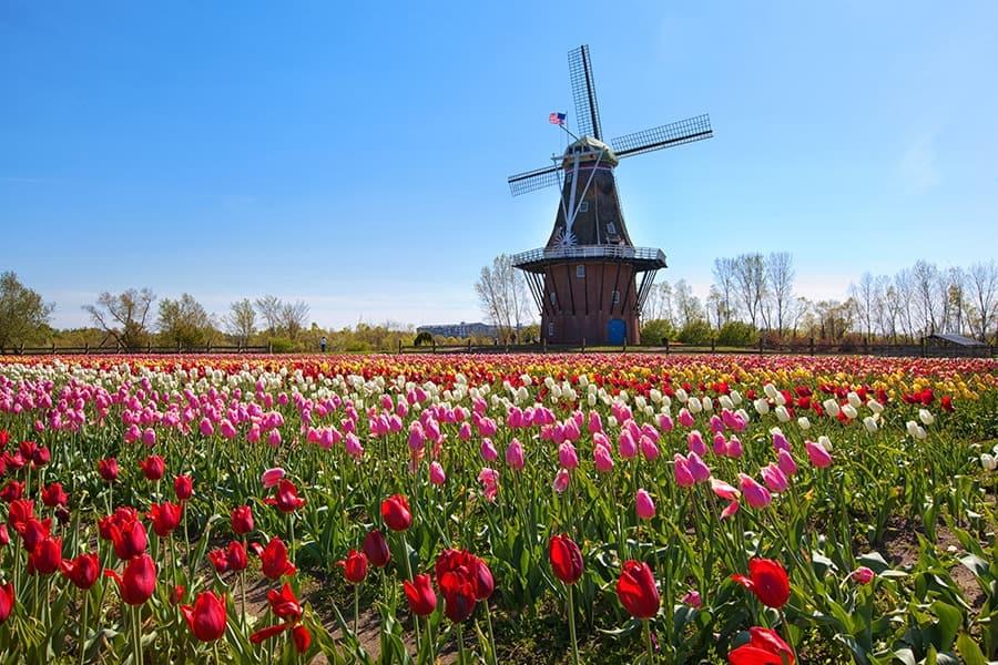 tulip time festival-holland-michigan
