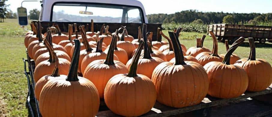Alabama- Bennett Farms