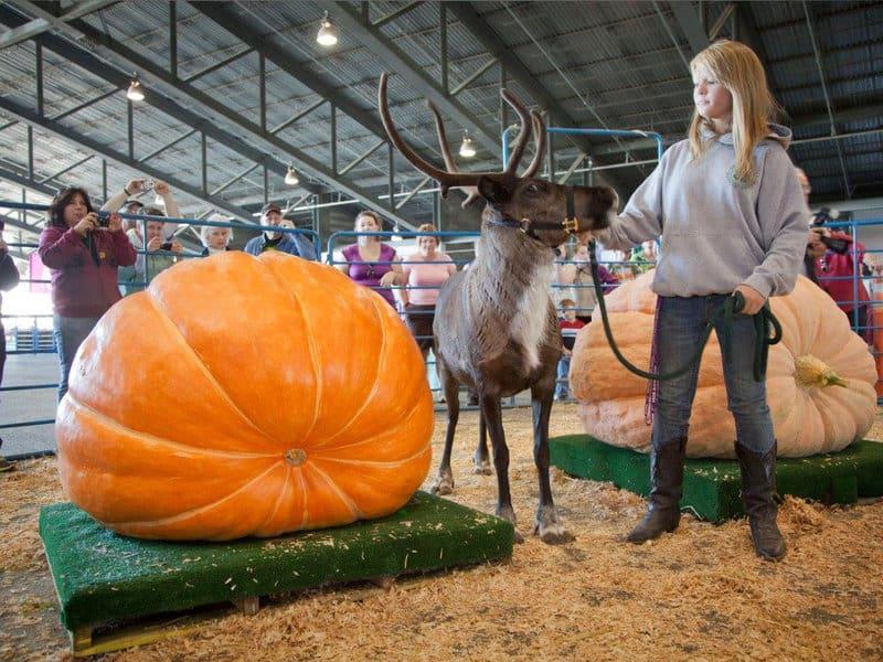 Alaska- Reindeer Farm