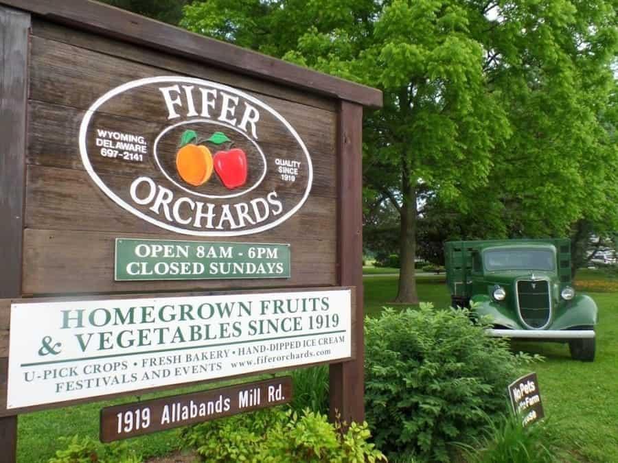 Delaware Fifer Orchards pumpkins