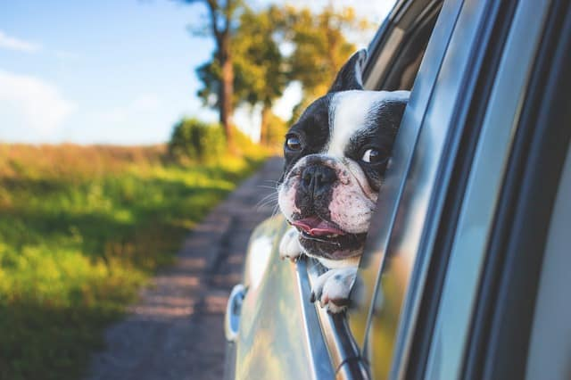 Dog friendly Road Trip USA