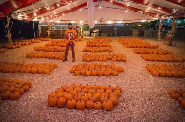 Florida- Mr Jack o Lanterns Pumpkin Patch