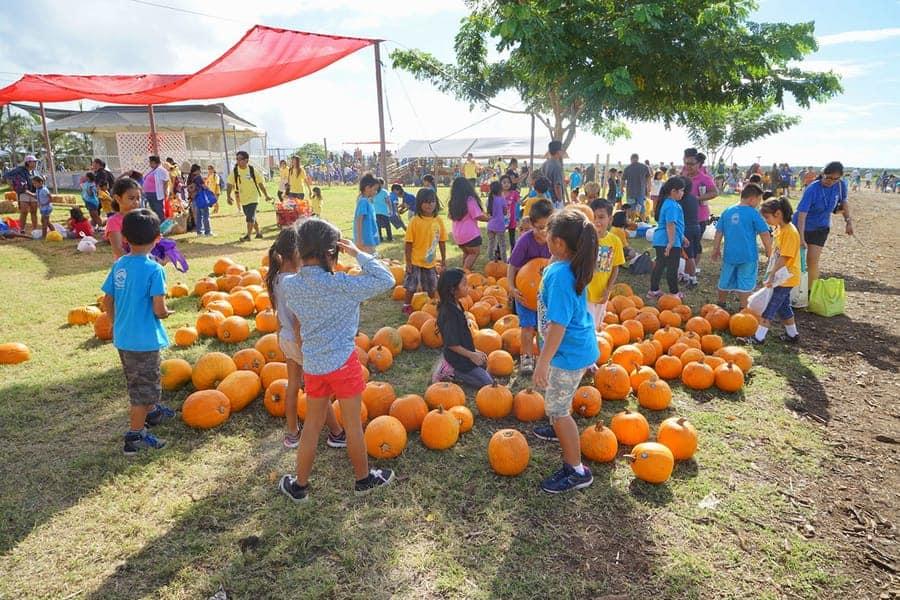 Hawaii Aloun Farms pumpkins
