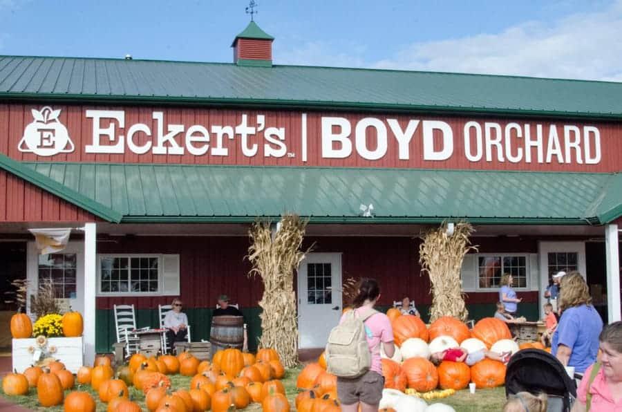Kentucky Eckert's-Boyd Orchard pumpkins